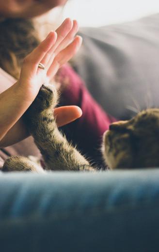 Hilfe für Katzen - Tierheilpraxis
