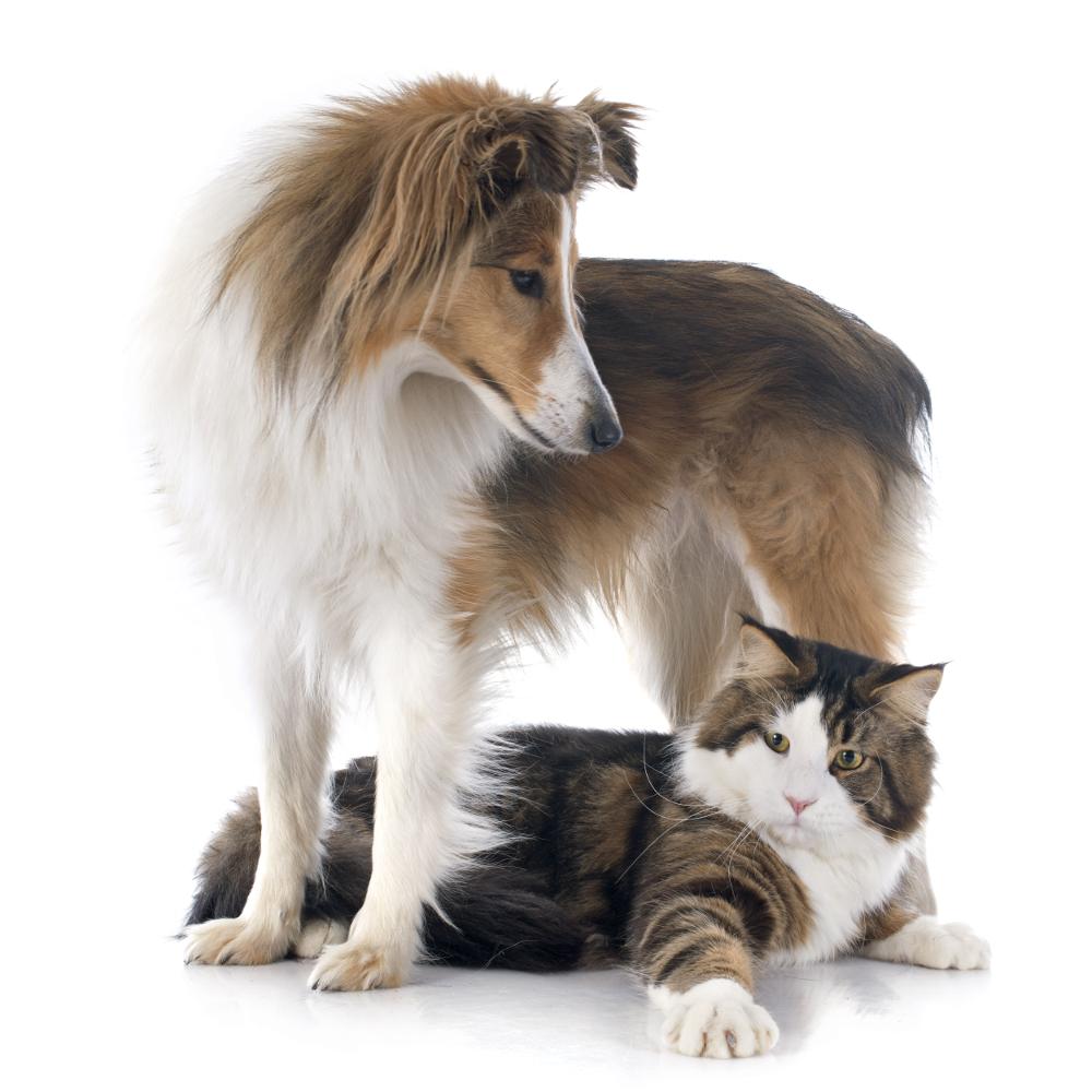 Tierheilpraxis Bartels - Hilfe für Hunde und Katzen
