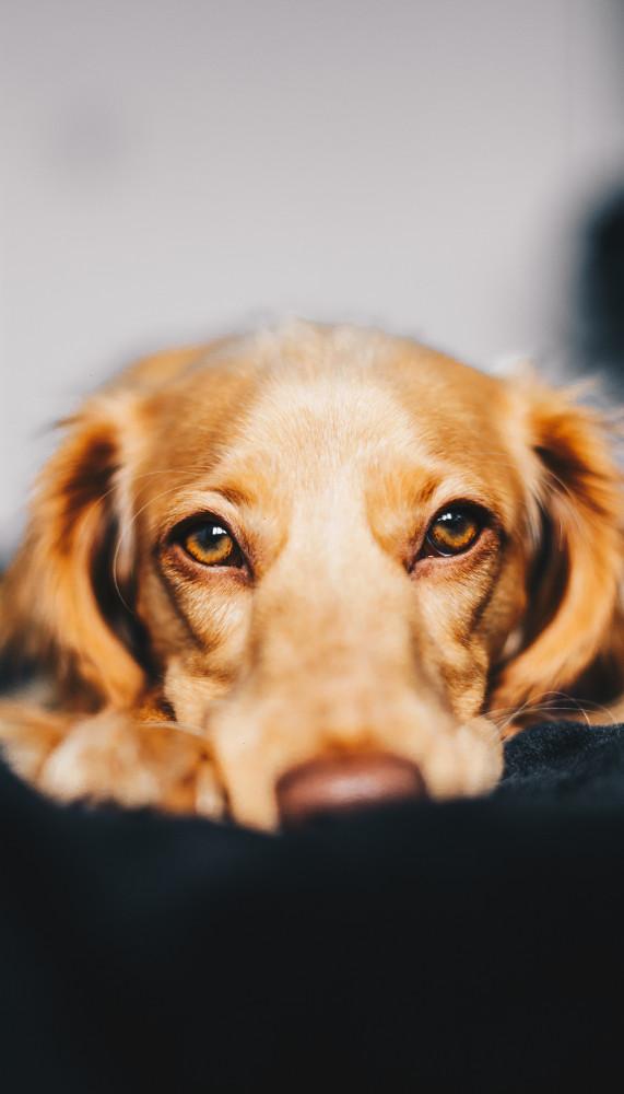 Tierhomöopathie hilft Hunden